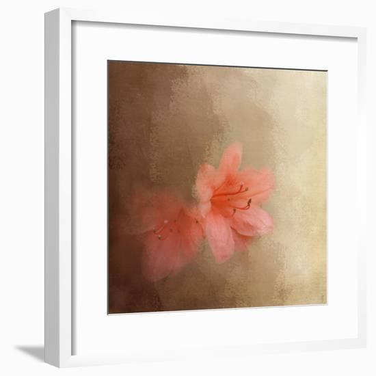 Salmon Azaleas-Jai Johnson-Framed Giclee Print