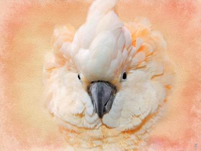 Salmon Crested Cockatoo Portrait 2-Jai Johnson-Giclee Print