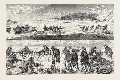 Salmon Fishing: Fishing Salmon--Giclee Print
