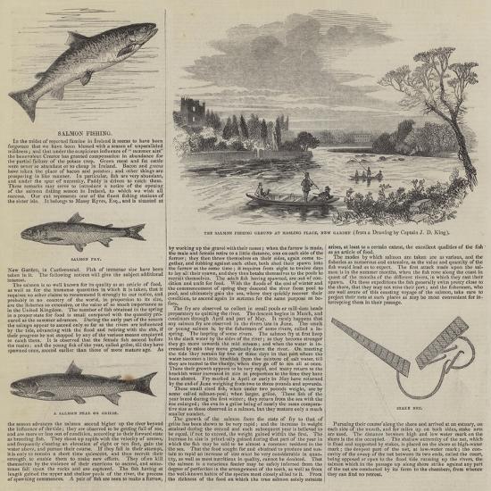 Salmon Fishing--Giclee Print