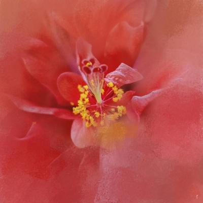 https://imgc.artprintimages.com/img/print/salmon-hibiscus-1_u-l-pu0ojh0.jpg?p=0