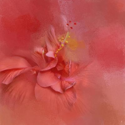 Salmon Hibiscus 2-Jai Johnson-Giclee Print