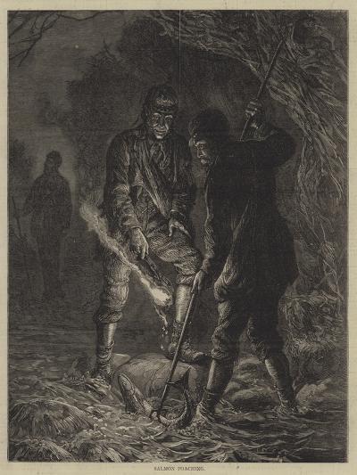 Salmon Poaching--Giclee Print
