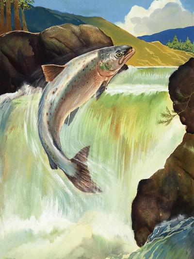 Salmon--Giclee Print