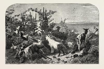 Salon of 1855, Goats, 1855-Filippo Palizzi-Giclee Print