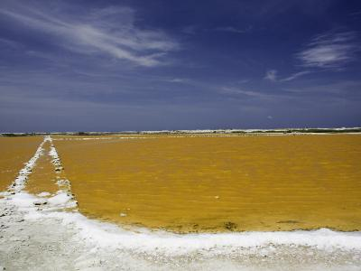 Salt Crusted Shoreline of a Salt Pan Near Lac Bay, Bonaire, Netherlands Antilles, Caribbean-David Fleetham-Photographic Print