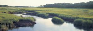 Salt Marsh Cape Cod Ma, USA