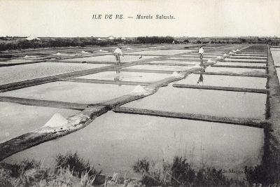 Salt on Ile de Re--Photographic Print