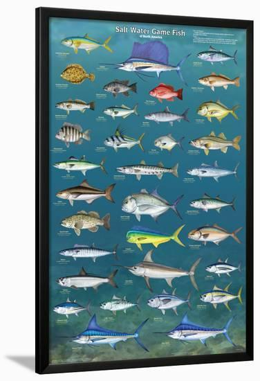 Salt Water Game Fish--Lamina Framed Poster