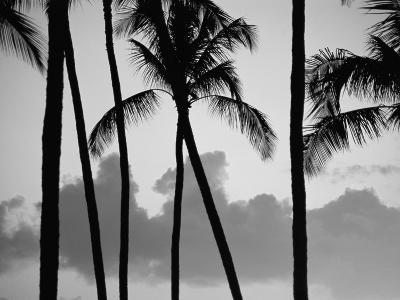 Salt Water Pond State Park, Kauai, Hawaii, USA, Pacific-McCoy Aaron-Photographic Print