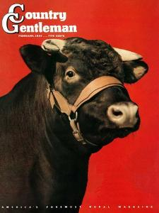 """""""Black Bull,"""" Country Gentleman Cover, February 1, 1944 by Salvadore Pinto"""