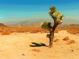 Desert Scene with Cactus Plant by Salvatore Elia