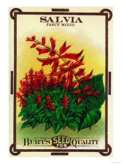 Salvia Seed Packet-Lantern Press-Art Print
