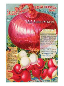 Salzer's Improved Red Onion