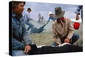 A Cowboy Castrates a Young Calf, While Behind Him Two Others Wrestle a Calf to the Ground. by Sam Abell