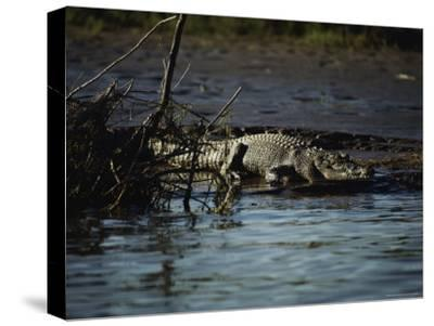 A Crocodile Lazes on a Sandbar
