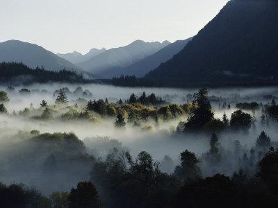 A Heavy Fog Fills a Valley in the Olympic Mountains