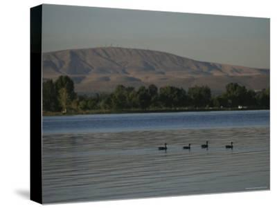 A Row of Ducks Swimming Along a River Past Foothills