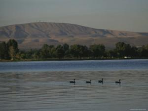 A Row of Ducks Swimming Along a River Past Foothills by Sam Abell