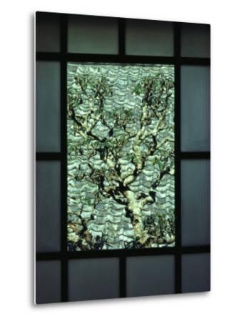 A Tree in a Courtyard Is Framed by a Window