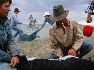 Cowboys on a Cattle Ranch by Sam Abell