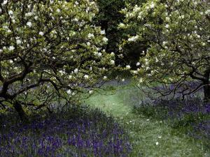 Flowering Trees Amid a Meadow Full of Wildflowers by Sam Abell