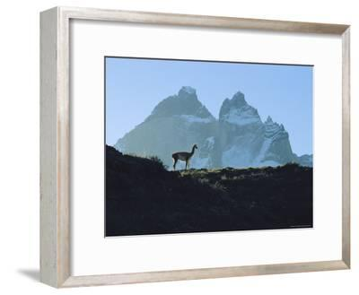 Guanaco Stands Against Mountain Backdrop, Andes Mountains, Tierra del Fuego, Chile