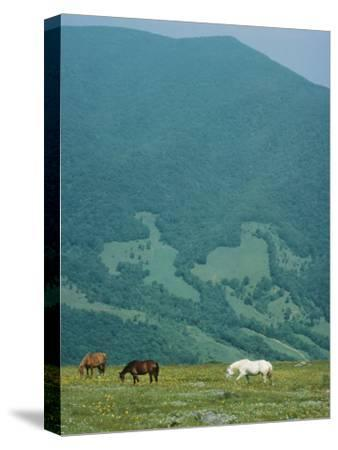 Horses Graze on Big Yellow Mountain, Appalachian Mountains, North Carolina