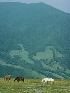 Horses Graze on Big Yellow Mountain, Appalachian Mountains, North Carolina by Sam Abell
