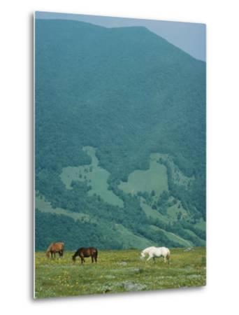 Horses Graze on Big Yellow Mountain, Appalachian Mountains, North Carolina