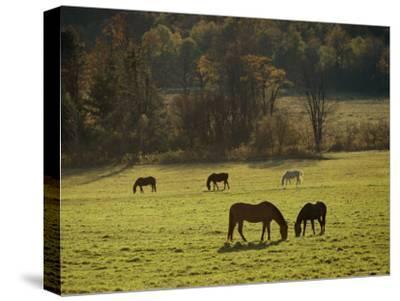 Horses Grazing in a Field, Tyringham, Massachusetts