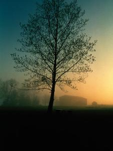 Misty Twilight View of a Silhouetted Tree by Sam Abell