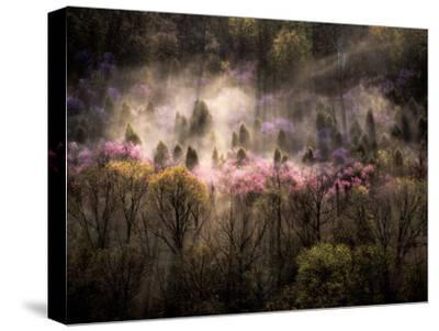 Misty View of a Forested Hillside with Trees in Bloom