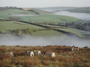 Sheep and Ponies on the Moor by Sam Abell