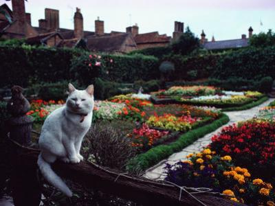 White Cat Perched on a Fence Overlooking the Gardens at Stratford-Upon-Avon, England by Sam Abell