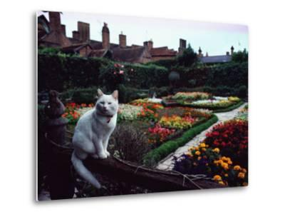 White Cat Perched on a Fence Overlooking the Gardens at Stratford-Upon-Avon, England
