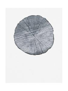 Old Growth Ring Print by Sam Appleman