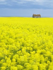 Barn and Canola Field, Southern Saskatchewan, Canada by Sam Chrysanthou