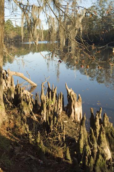 Sam Houston Park, Lake Charles, Louisiana-Natalie Tepper-Photo