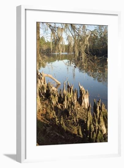 Sam Houston Park, Lake Charles, Louisiana-Natalie Tepper-Framed Photo