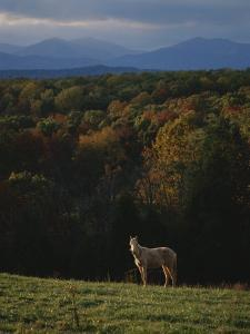 A Horse Stands on a Hill Overlooking Autumn Foliage and Mountains by Sam Kittner