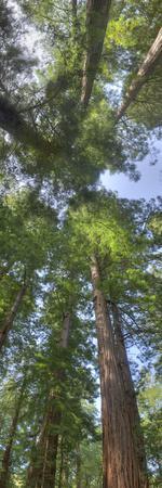 Upward view into a tree canopy.