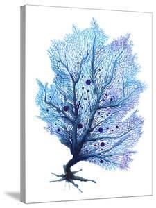 Blue Fan Coral by Sam Nagel