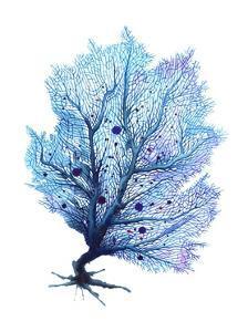 Fan Coral - Blue by Sam Nagel