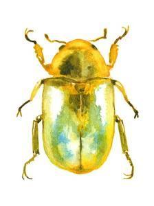 Golden Beetle by Sam Nagel