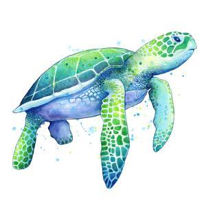 Green Sea Turtle by Sam Nagel