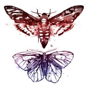 Moths by Sam Nagel