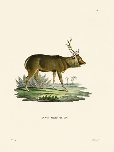 Sambar--Giclee Print