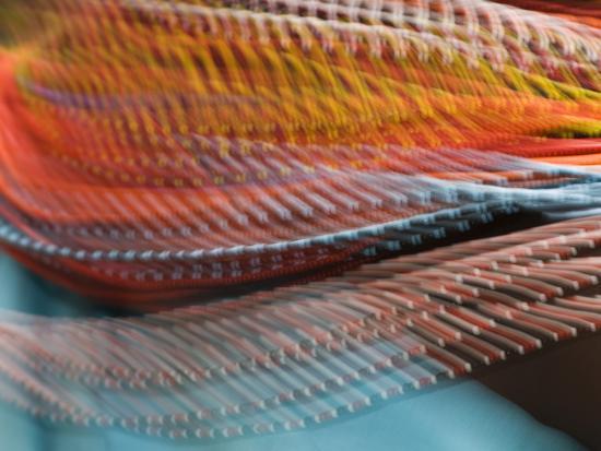 Samburu Dancer's Colorful Necklace, Samburu National Reserve, Kenya-Arthur Morris-Photographic Print