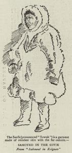 Samoyed in the Sovik